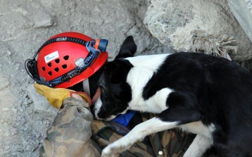 rescue3.jpg