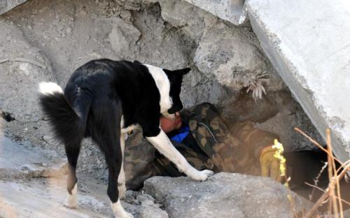rescue4.jpg